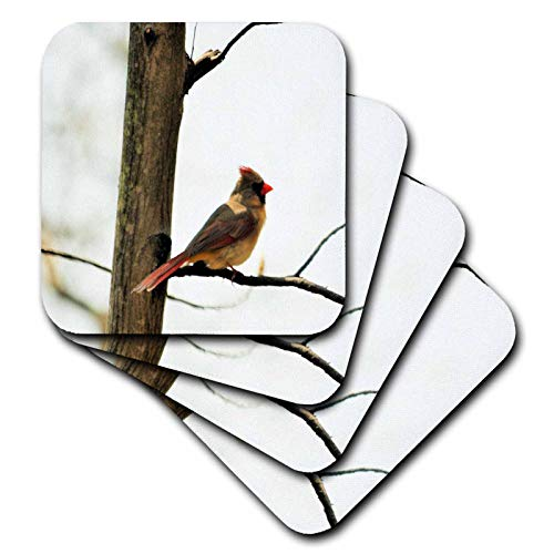 3dRose Dreamscapes by Leslie - Birds - Female cardinal sitting in a tree - set of 8 Coasters - Soft (cst_292217_2)