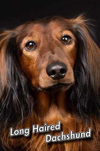 Long Haired Dachshund: 2020 Weekly Calendar | 12 Months | 107 pages 6 x 9 in. | Planner | Diary | Organizer | Agenda | Appointment | Half Spread Wide Ruled Pages
