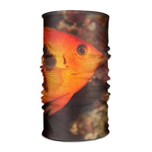 (PengMin Dwarf Saltwater Angelfish Unisex Fashion Quick-drying Microfiber Headdress Outdoor Magic Scarf Neck Neck Scarf Hooded Scarf Super Soft Handle)