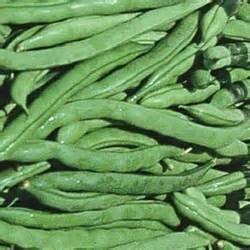 Juju's Garden Green Beans (Kentucky Wonder)-50 Seeds (Wonder Beans Kentucky Bush)