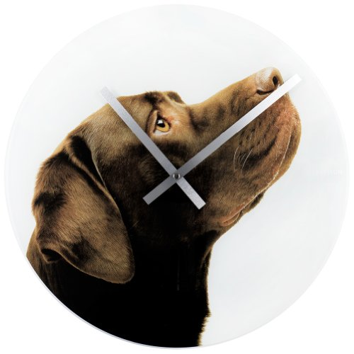 Chocolate Labrador Retriever - Animal World - Crazy Dogs Wall Clock
