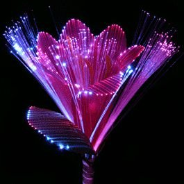 Fiber Optic Flowers by Blinkee