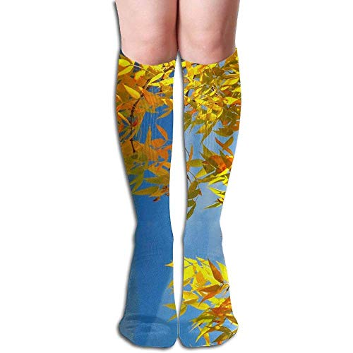 Hill Cotton Curtain (Branches Hills Sky Trees Fall Nature Beautiful Women's Fashion Knee High Socks Casual Socks)