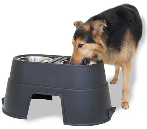 Buy dog bowls