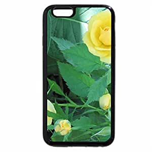 iPhone 6S / iPhone 6 Case (Black) Colorful Flowers a garden makeup 62