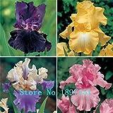 大セールアイリス種子大胆な色のひげを生やしたアイリスコレクション種子カラフルな花の種子の100pcs