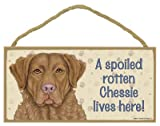 (SJT61980) A spoiled rotten Chessie (Chesapeake Bay Retriever) lives here wood sign plaque 5