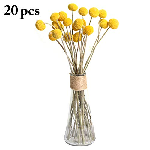 JUSTDOLIFE Dried Flower Decorative Craspedia Photography Prop Preserved Flower for ()
