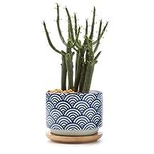 T4U 3 Inch Ceramic japanese Style Serial No.3 succulent Plant Pot/Cactus Plant Pot Flower Pot/Container/Planter White