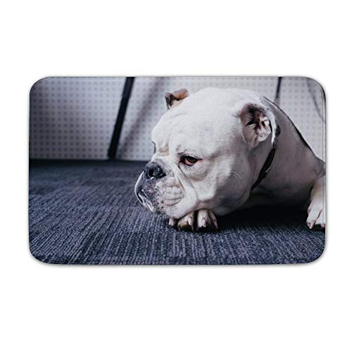 FGN Large Outdoor Door Mats Photo of Adult White English Bulldog Lying On Black Area Rug Coral Velvet Shoes Scraper 20