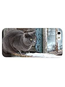 3d Full Wrap Case for iPhone 5/5s Animal Beautiful Gray Cat by rushername