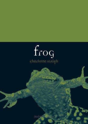 Frog (Animal Series) -