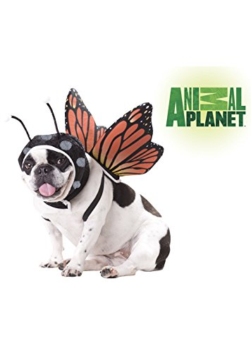 Animal Planet PET20101 Butterfly Dog Costume, Medium