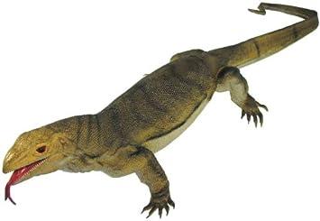 41 Inches Long 3-Lb Jumbo Monitor Lizard