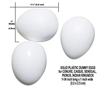 Amazon com : DummyEggs Stop Egg Laying! Fake Bird Eggs: Am Budgie