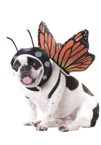 (Animal Planet PET20101 Butterfly Dog Costume,)