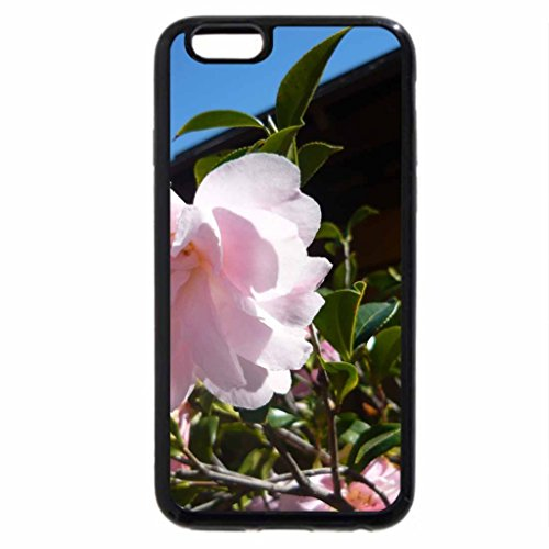 iPhone 6S / iPhone 6 Case (Black) Soft Pink Camelia
