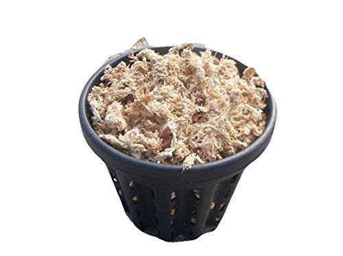JoelsCarnivorousPlants One 6 Inch Root Pruning Pot with New Zealand Sphagnum Moss
