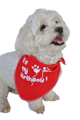 Ruff Ruff and Meow Doggie Bandana, Its My Birthday, Red, - Red Ban