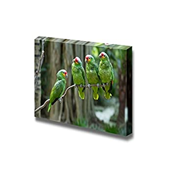 Canvas Prints Wall Art - Four Green Parrot Birds Sitting on The Perch | Modern Wall Decor/Home Decoration Stretched Gallery Canvas Wrap Giclee Print & Ready to Hang - 32