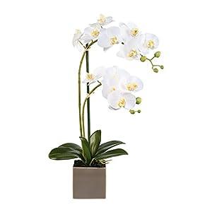 "Deutschmade Artificial Flower, White Orchid Phalaenopsis Including Vase, 22"" 20"