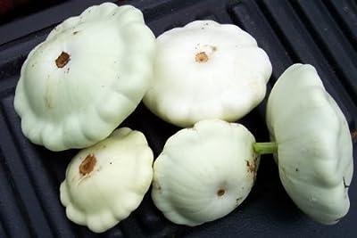 50 WHITE BUSH SCALLOP SQUASH (Patty Pan / Paty Pan / Squanter Squash) Summer Cucurbita Pepo Vegetable Seeds
