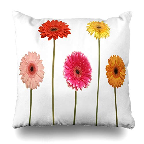 Ahawoso Throw Pillow Cover Square 20x20 Gerber Stem Five Flowers White Nature Blossom Green Daisy Closeup Gerbera Abloom Growth Pillowcase Home Decor Cushion Pillow Case