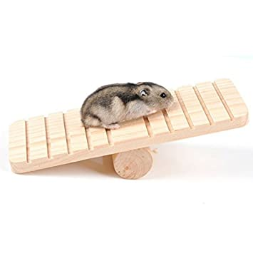 Anal sex hamster