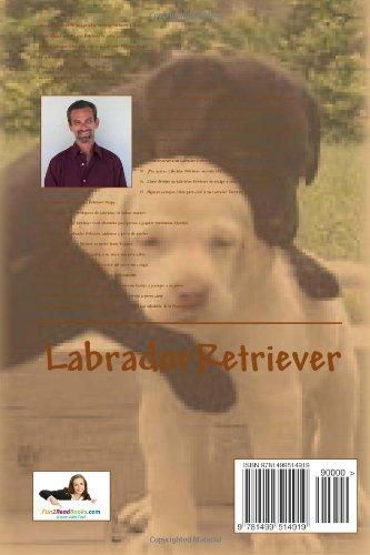 Nuevo Y Mejorado Como Entrenar Y Entender Su Labrador Retriever Cachorro O Per (Spanish Edition): Vince Stead: 9781499514919: Amazon.com: Books