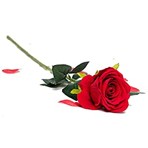 "Royal Imports Velvet Artificial Faux Fake Silk Rose Flower Bouquets, Weddings, Valentines, Wreaths, Crafts, Single Stem (1 Dozen) 30"" Long 7"