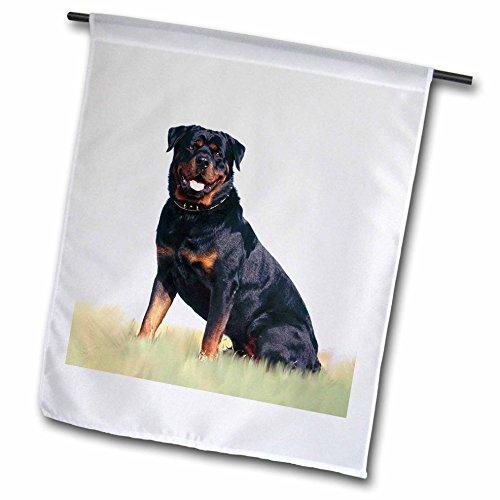 3dRose Dogs Rottweiler - Rottweiler - 18 x 27 inch Garden Flag (fl_4367_2)