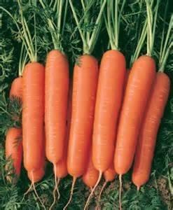 David's Garden Seeds Carrot Scarlet Nantes EB116E (Orange) 1000 Heirloom Seeds