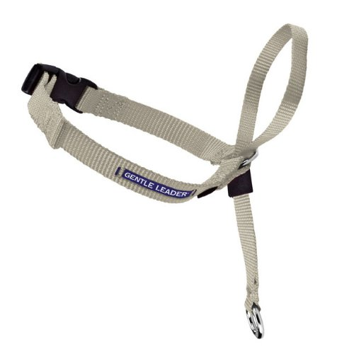 Gentle Leader Quick Release Dog Head Collar Color: Fawn, Size: Medium (11.5'' x 0.75'' x 1.75'') by Premier-Pet-Products