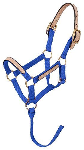 Tough 1 Miniature Nylon Break-Away Halter, Royal Blue, Large Classic Nylon Halters