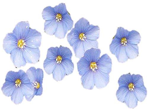 Zellajake Farm and Garden All Blue Wildflower Mix Seeds Perennial Biennial S17 (200 Seeds)