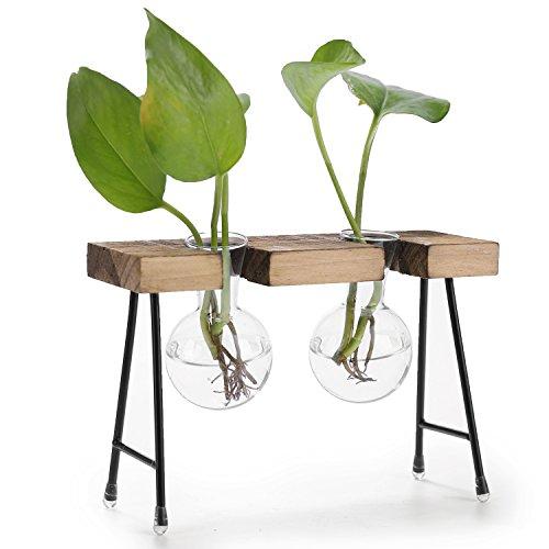 (MyGift 2-Glass Beaker Bulbs Terrarium Planter Set with Rustic Wood Stand)