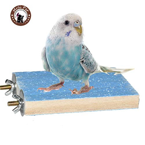 Colorful Bird Perch Stand