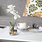 MyGift-Mini-Synthetic-Silk-Artificial-Phalaenopsis-Orchid-in-Glass-Vase-White