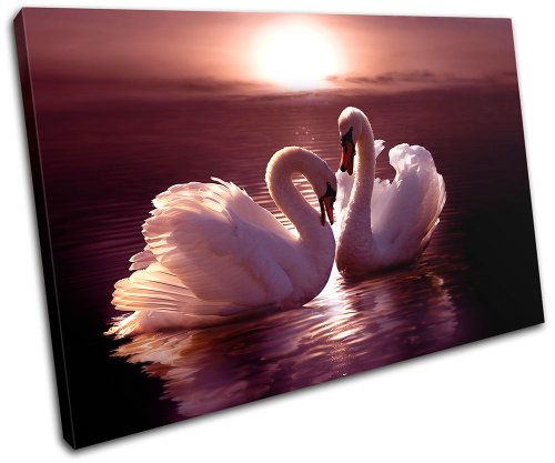 Bold Bloc Design - Swans Love Hearts Pink Animals 45x30cm SINGLE Canvas Art Print Box
