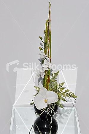 Petite Dendorodium unidades de Phalanopsis pecera de orquídeas: Amazon.es: Hogar