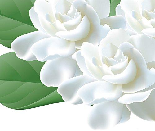 Futaba® Jasmine Jasminum Oleaceae Erect or Climbing Shrub 50 (Climbing Jasmine Plant)