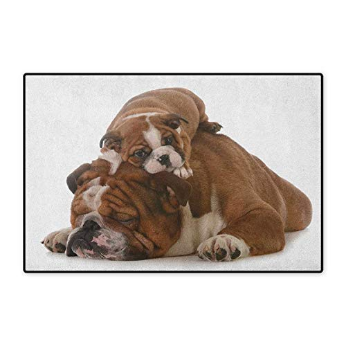 - English Bulldog,Door Mat Indoors,Father and Son Bulldogs Fathers Day Photograph Domestic Pet Animals,Indoors Doorroom Mats Non Slip,Brown White Black,Size,32