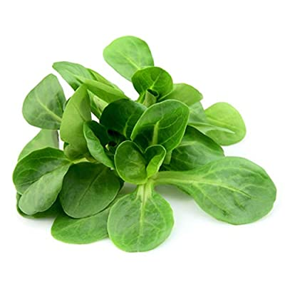 Marde Ross & Company Corn Salad - Mache Lettuce - Delicious Nutty Flavored Lettuce Seeds : Garden & Outdoor
