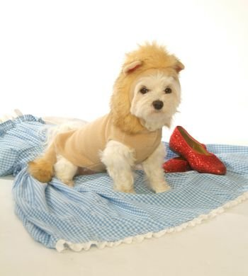 Dog Costume - Hoodie Lion Dog Costume - (Tin Man Dog Costumes)