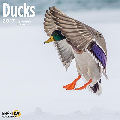 Ducks 2017 16 Month Wall Calendar 12 x 12 inches Bright Day Calendars Publishing