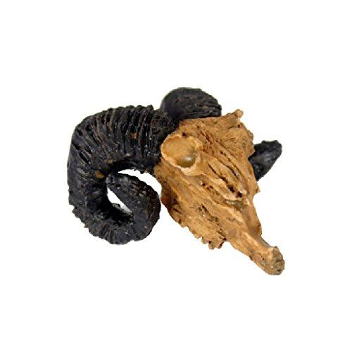 Modelo de Reptil Vivero Cráneo Ornamento de Cabra Decoración Terrarios Jardinería Bricolaje