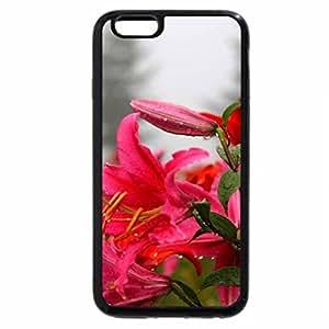 iPhone 6S Plus Case, iPhone 6 Plus Case, SPRING MIST