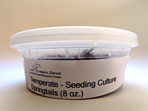 live-springtails-temperate-seeding-culture