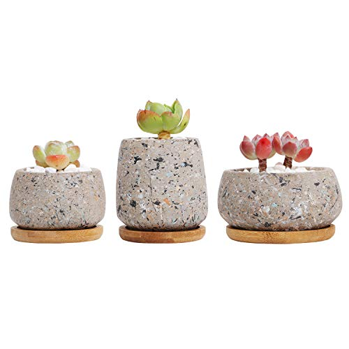 T4U Cement Succulent Cactus Pot, Concrete Planter Pot Container Window Box, Small Clay Pot for Plants Flowers with Drainage Bamboo Tray for Home Decor, Set of 3 Gray