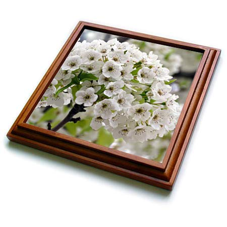 3dRose Jos Fauxtographee- White Bouquet - A big white bouquet of flowers on a tree in spring - 8x8 Trivet with 6x6 ceramic tile - Flower Trivet White